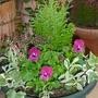 little garden in pot... for winter