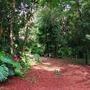 Agarden scene (Tropical garden scene)