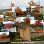 Autumn_colours_in_the_whaddons_small_
