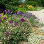 Beth Chatto Gardens - gravel garden