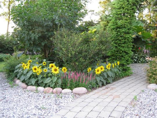 I try to vary this border every year, next year I will plat Zinnia ´Persian carpet´.