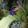 Air_flower_1