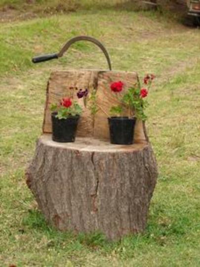 Pot plants on bench