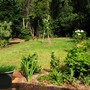another garden scene (Garden scene in rainforest)