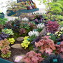 cardiff rhs show 