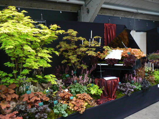 heuchera at Harrogate spring flowers show