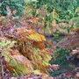 Biddulph Grange Nr congleton last Autumn