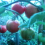 Garden_photo_s_130