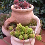 Late Autumn Pots