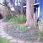 Side back garden