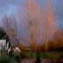 Strange Sky - My garden at 3.30pm today.