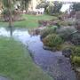 A_new_pond_2