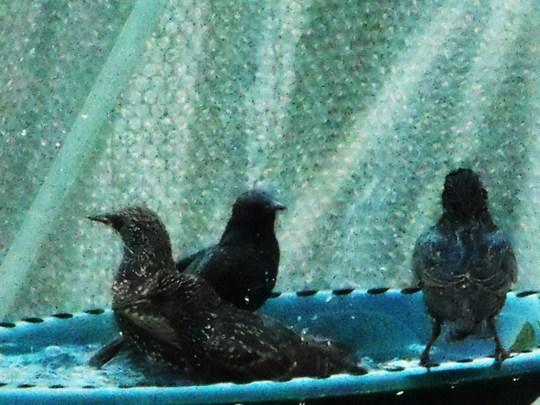 Bath time..........