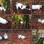 "Buddy & Holly - ""Autumn Mouse Hunt"""