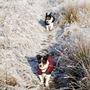Buddy & Holly - Frosty Walk