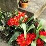 Tulips, Lavander and Wallflower.