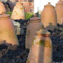 The March of the Rhubarb Pots!