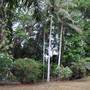 DRY SEASON GARDEN SCENE (Waiting for the monsoon rains)