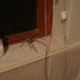 Spider in the Bathroom