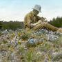 Botanist JOHN DAVIDSON... working on Skwoach Mountain, Canada. Circa 1915.