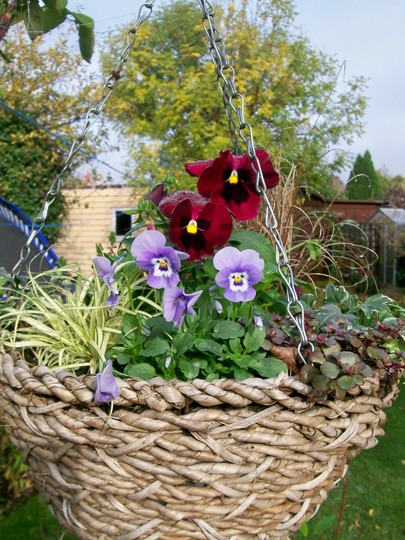 My winter baskets getting going nicely