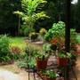 A garden scene (TROPICAL GARDEN SCENE)