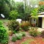 A garden in the tropics (A TROPICAL GARDEN SCENE)