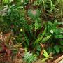 SHADE PLANTS (Shade garden plants)