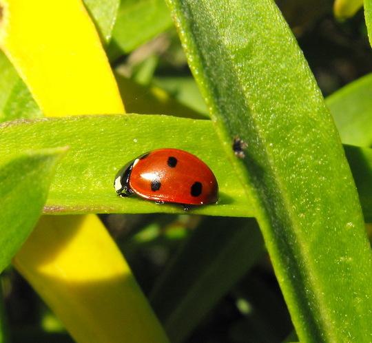 """A Ladybird """"Blog"""""""