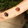 Ladybirds.