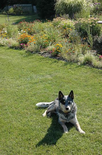 My Boy Jack, relaxin' in the garden