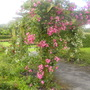 St_annes_national_rose_garden_of_ireland_068