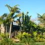 Veitchia 'Soledad'  and Ravenala madagascariensis - Traveler's Palm (Veitchia 'Soledad'  and Ravenala madagascariensis - Traveler's Palm)
