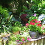 Summer colour downunder:  Pots out in the courtyard garden
