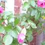 "Rosa ""Sister Elizabeth"""