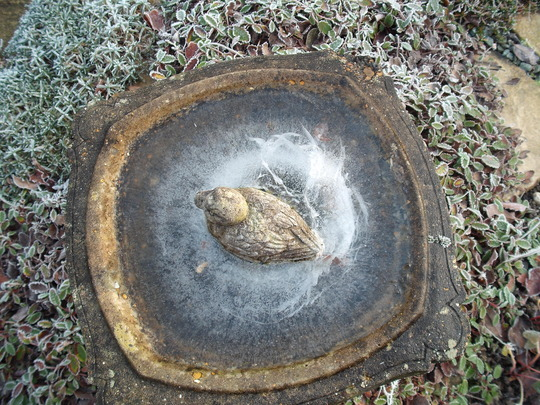 Frozen duck