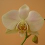 Another Orchid!!! (Orchid)