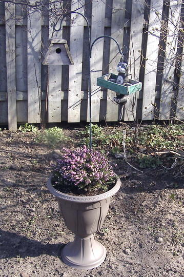 """Heath planter (Erica carnea """"pirbright rose"""")"""