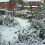 Front garden this morning