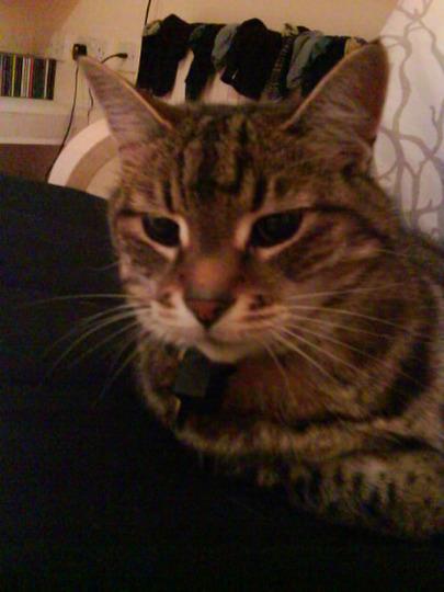 Our Cat Bruce.
