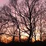 Hanworth Trees