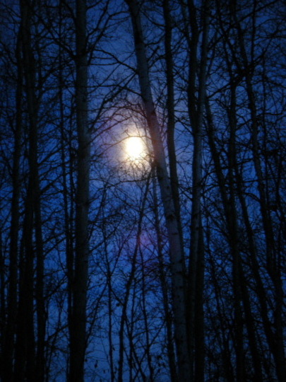Moon Through the Poplar