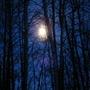 Moon Through the Poplar