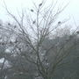 24_doves