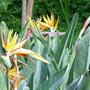 Alameda_Gardens_4.jpg