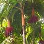 Hawaii_august_09_2009_027
