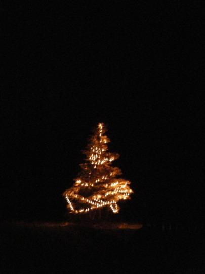 Christmas Tree Popups