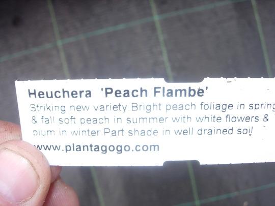 plantgogo label