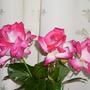 Rose Goujard
