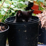 Jo_jo_hiding_in_a_flower_pot